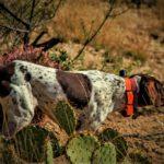 RAPT 1450 Upland Beeper on dog
