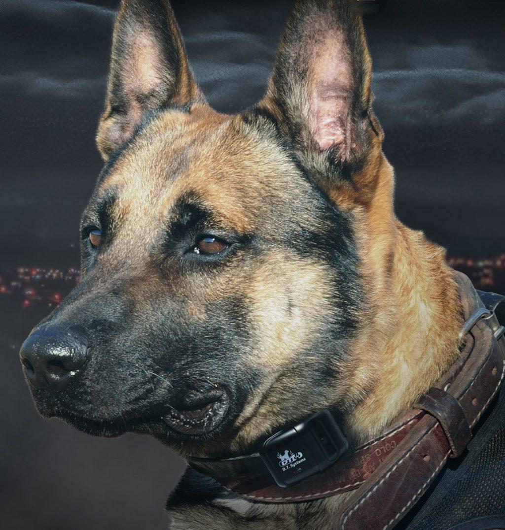 K9 1100 Dog OM image
