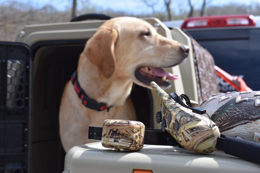 RAPT 1400 Camo on dog