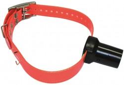 btb-belt.jpg